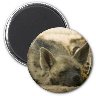 Sleeping Hyena  Magnet