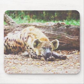 Sleeping Hyena Photograph Mouse Pad