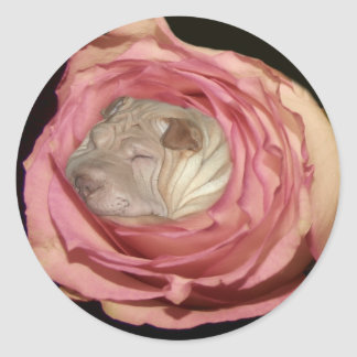 Sleeping in a Pale Pink Rose, Chinese Shar Pei Dog Classic Round Sticker