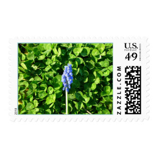 Sleeping in Clover Postage