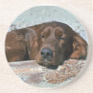 Sleeping Irish Setter Sandstone Coaster