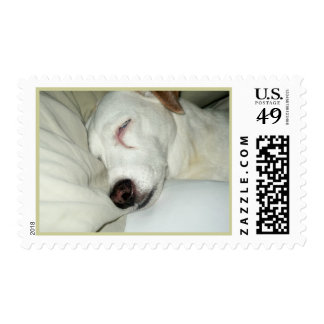 Sleeping Jack Russell INDI Postage Stamps