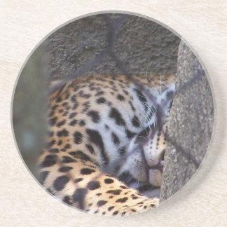 Sleeping jaguar fence tree abstract photograph coaster