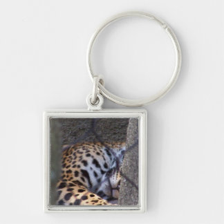 Sleeping jaguar fence tree abstract photograph keychain