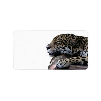 Sleeping Jaguar no background Label