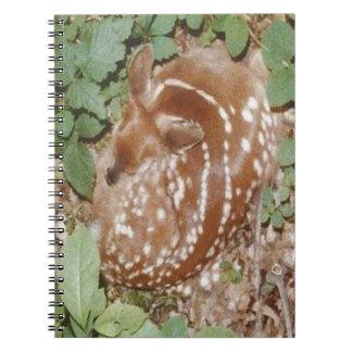 Sleeping.jpg cogido cervatillo cuadernos