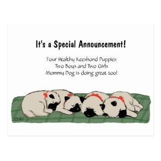 Sleeping Keeshond Puppies - Cute Announcement Postcard