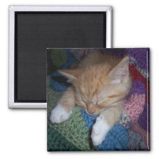 Sleeping Kitten 2 Inch Square Magnet