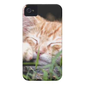 Sleeping Kitten Case-Mate iPhone 4 Case