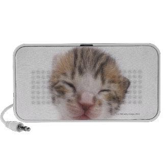 Sleeping kitten, close-up of head laptop speaker