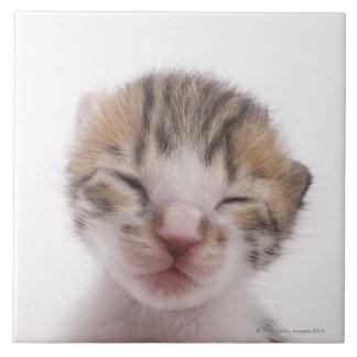 Sleeping kitten, close-up of head tile
