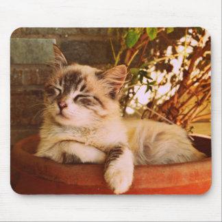 Sleeping Kitten in Pot Mouse Pad