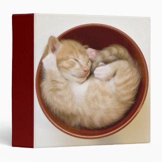 Sleeping kitten in simple red bowl on white binder
