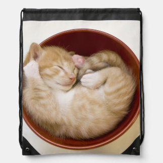 Sleeping kitten in simple red bowl on white drawstring backpack