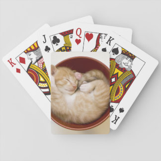 Sleeping kitten in simple red bowl on white playing cards