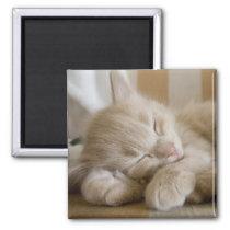 Sleeping Kitten Magnet