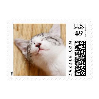Sleeping Kitten On Tatami Mat Postage