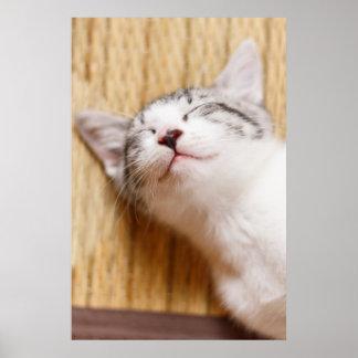 Sleeping Kitten On Tatami Mat Poster