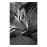 Sleeping Kitten Stationery