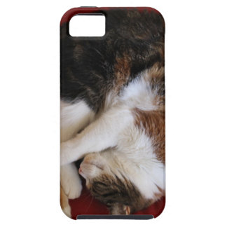Sleeping Kittty iPhone 5 Cover