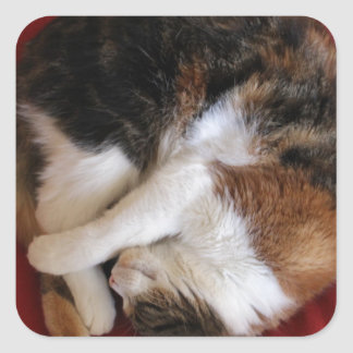 Sleeping Kittty Stickers