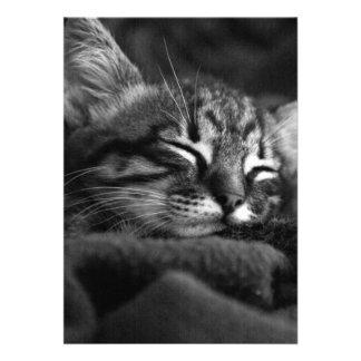 Sleeping kitty invitation