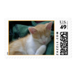 Sleeping kitty postage stamp
