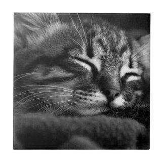 Sleeping kitty tile