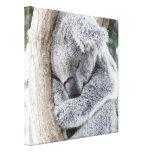 sleeping koala baby stretched canvas prints