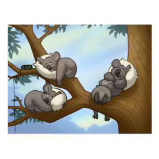 Sleeping Koala Postcard