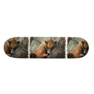Sleeping Kodiak Bear Skateboard