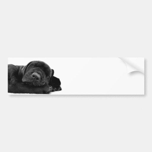 Sleeping Lab Bumper Sticker