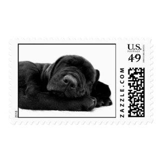 Sleeping Lab Postage Stamp