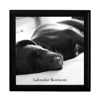 Sleeping Labrador Retriever Puppy Gift Boxes