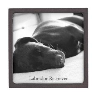 Sleeping Labrador Retriever Puppy Premium Gift Box