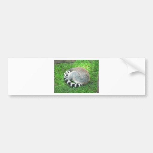 Sleeping Lemur On Grass Car Bumper Sticker