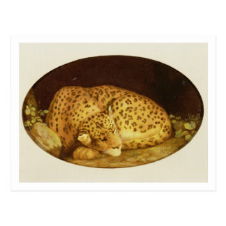 Sleeping Leopard, 1777 (enamel on biscuit Postcard