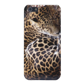 Sleeping Leopard iPhone 4 Speck Case Case For iPhone 5/5S
