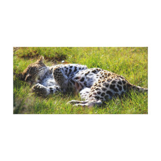 Sleeping Leopard on the grass in South Africa Canvas Print