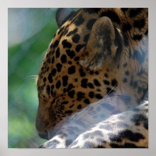 Sleeping Leopard Poster