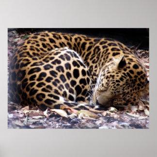 Sleeping Leopard Print