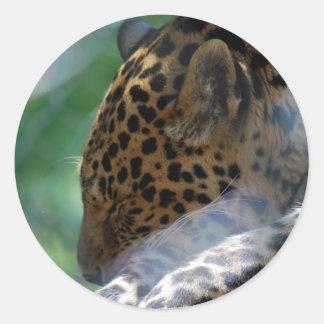Sleeping Leopard Stickers