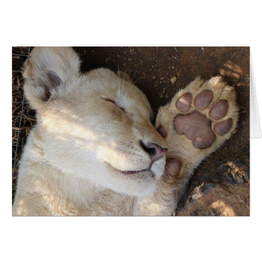 Sleeping Lion Cub notecard