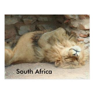 Sleeping Lion Postcard