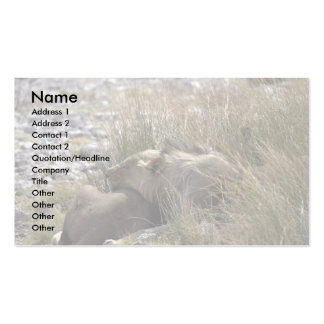 Sleeping lions Double-Sided standard business cards (Pack of 100)