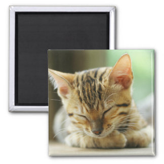 Sleeping Little Baby Kitty 2 Inch Square Magnet