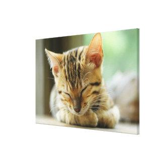 Sleeping Little Baby Kitty Canvas Print