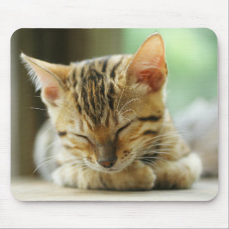 Sleeping Little Baby Kitty Mouse Pad