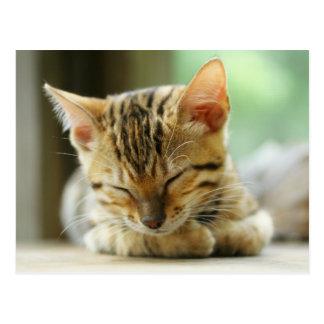 Sleeping Little Baby Kitty Postcard