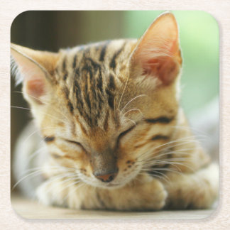 Sleeping Little Baby Kitty Square Paper Coaster